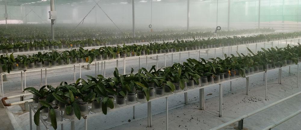 افتتاح پروژه ای 4200 متری گل ارکیده - ورامین